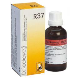 R37 טיפות, נקז למערכת העיכול